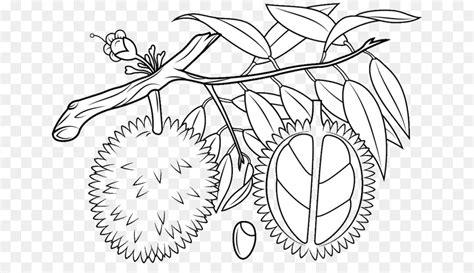 mewarnai gambar pohon rambutan
