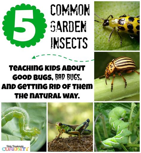 Garden Bug by Teaching Children About Garden Bugs And Pesticide