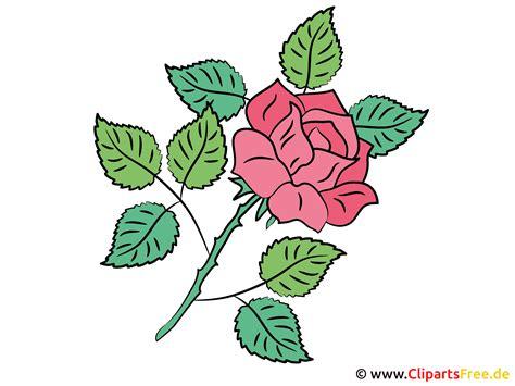 rose bild cliparts