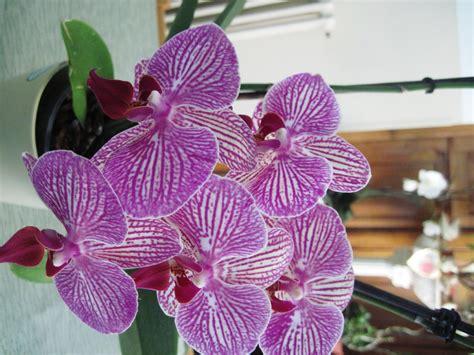 immagini fiori orchidee orchidee foto immagini piante fiori e funghi fiori