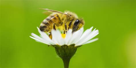 B&Q are helping save the bees by stopping this one thing