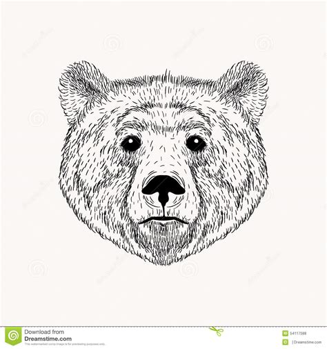 sketch realistic face bear hand drawn stock illustration