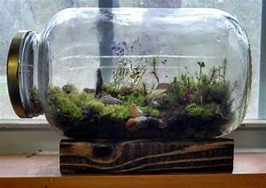 Homemade terrariums no need to water them they have for Whirlpool garten mit bonsai terrarium