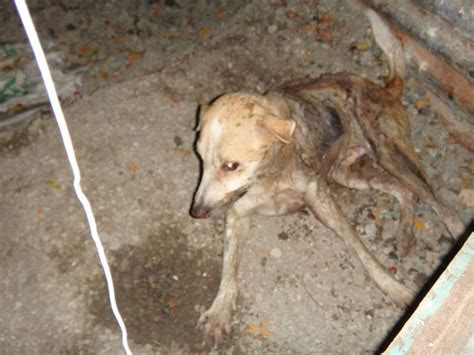 dogs died   doused  sulfuric acid life
