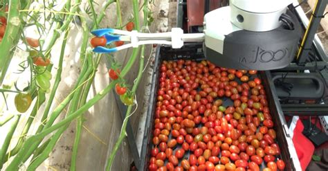 technology this robot can tomatoes without bruising them and detect ripeness better than