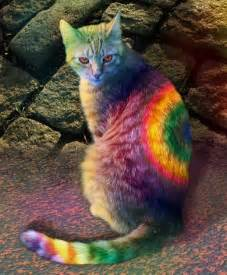 tie dye cat follow the piper dyeing pets
