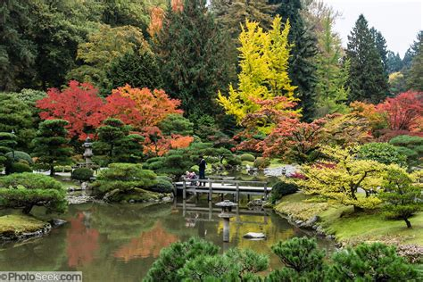 fall foliage colors pond seattle japanese garden
