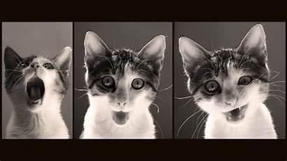 Funny Desktop Cat Wallpapers Amazing
