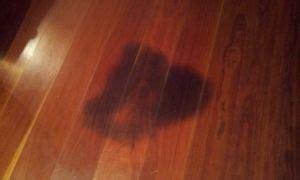 cleaning pet stains from wood floors pin by junebug42 on diy crafts and handy tips