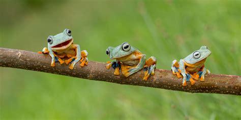 wallpapers de ranas en hd fondos de pantalla de ranas