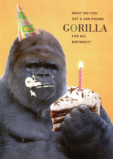 pound gorilla eating  piece  cake funny humorous
