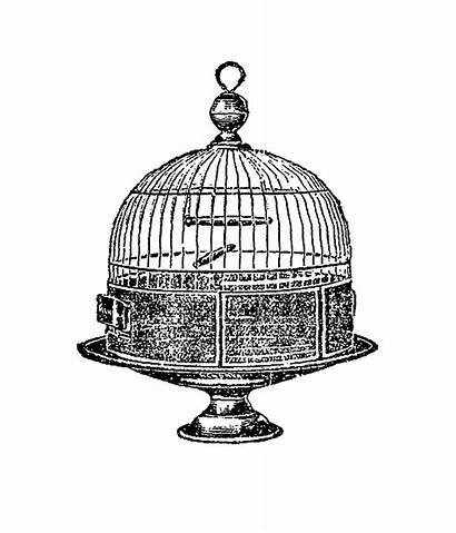 Cage Bird Antique Clip Digital Dome Illustration