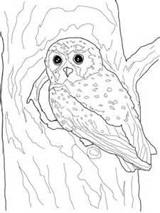 elf owl coloring page supercoloringcom