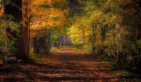 tranquil forest path photograph  stan dzugan
