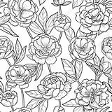 Peony Outline Flowers Flower Floral Coloring Seamless Romantic Leaves Vector Line Pattern Drawings sketch template