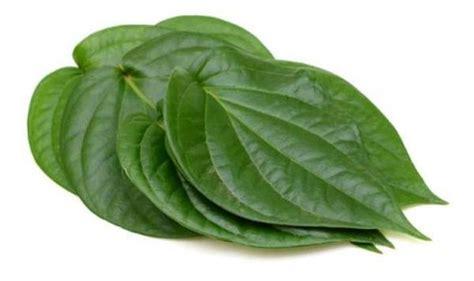 betel leaf oil betel leaf oil   benefits betel