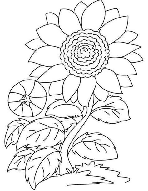 gambar bunga kartun mewarnai lukisan bunga buku