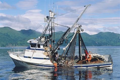 Alaska Commercial Fishing Boats For Sle | ak fish counts