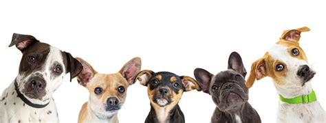 multiple dog breeds   row web banner stock photo