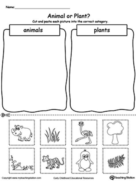 kindergarten plants and animals printable worksheets myteachingstation