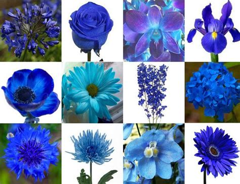 blue flowers wedding flowers add pic source  comment