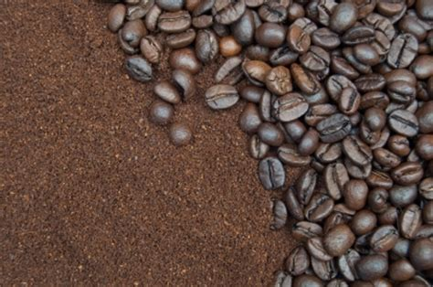 Uses Of Coffee Grounds In The Garden   Fresh Organic Gardening