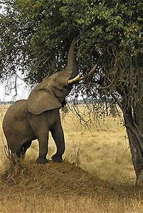 African Elephants Slideshow | The Nature Conservancy
