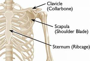 Clavicle Fracture  Broken Collarbone  - Orthoinfo