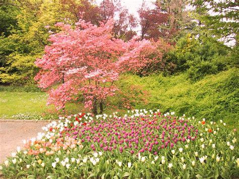 fondos escritorio flores jardines