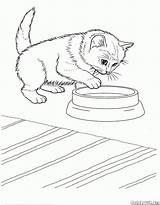 Coloring Cat Cats Javanese sketch template