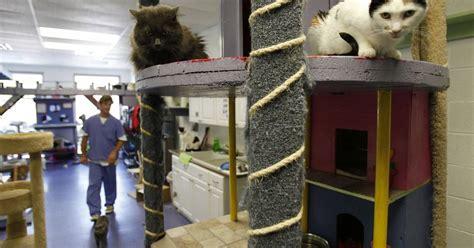 animal house huntley huntley s animal house shelter celebrates 10 years