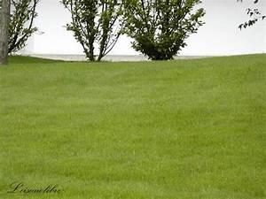 Comment Refaire Sa Pelouse : pelouse d finition c 39 est quoi ~ Carolinahurricanesstore.com Idées de Décoration