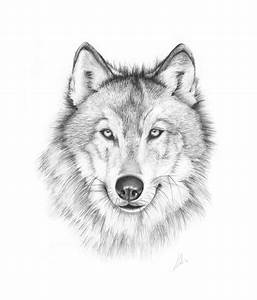 1000 Ideas About Wolf Drawing Easy On Pinterest Anime Wolf ...