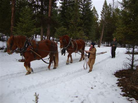 logging horse draft horses woods natural horsemanship