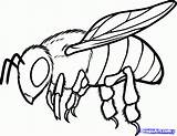 Cricket Insect Drawing Draw Bug Cute Clipartmag sketch template