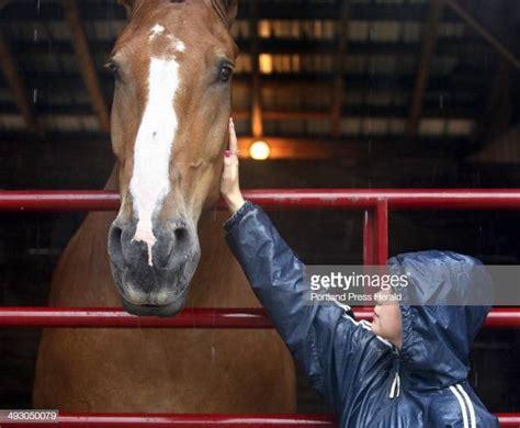 belgian zeus draft horse brooke eastman porter pets