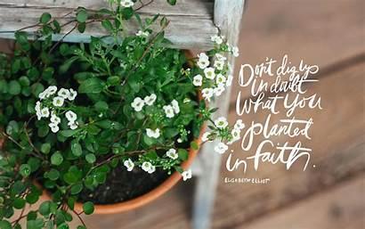 Faith Desktop June Seeds Plant Thorn Sparrow
