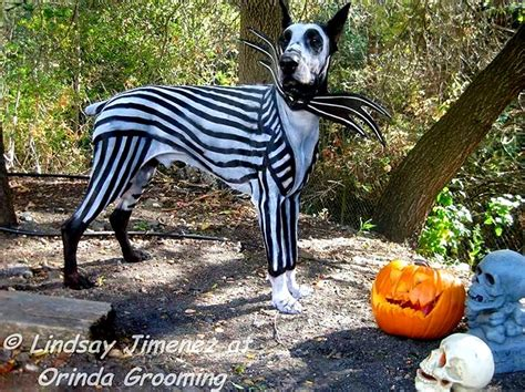 edward scissorhands christmas dogs dressed as tim burton characters for halloween life