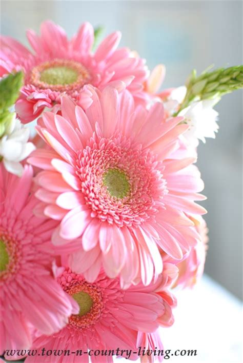 Why I Love Pink Gerbera Daisies Town And Country Living