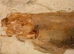 From the Jurassic Period Fish Fossil