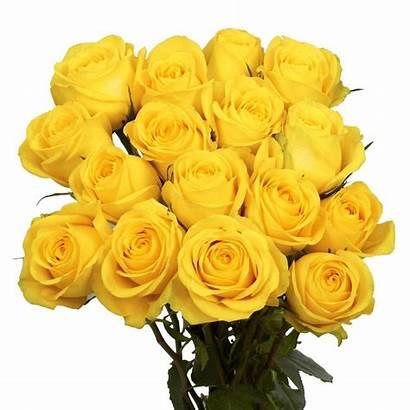 Roses Yellow Rose Flower Fresh Globalrose Stems