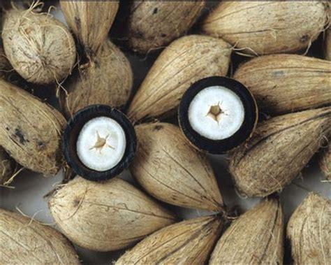Murumuru Butter - 100% pure from Brazil. – Rainforest Chica