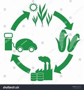 Biofuel Biomass Ethanol Life Cycle Diagram Stock Vector