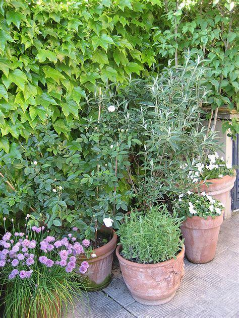 vasi di lavanda progettazione outdoor per un giardino in toscana