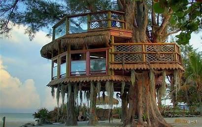 Treehouse Tree Desktop Houses Wallpapers Swiss Robinson