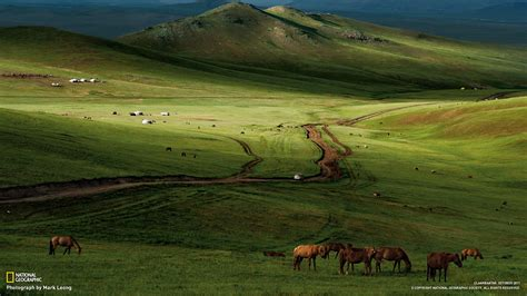 horses mongolian steppe national geographic  wallpapers   preview wallpapercom