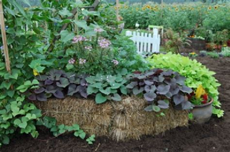 hay bale gardening the many benefits of hugelkultur permaculture magazine