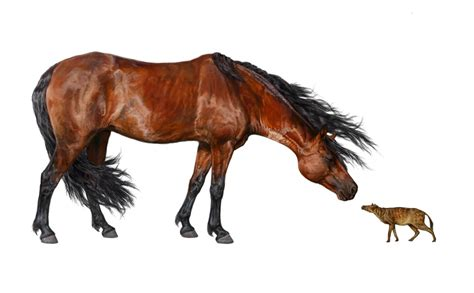 horses earliest horse earth early years america ago million north earthsky tall appeared modern change feet ancient prehistoric climate millions