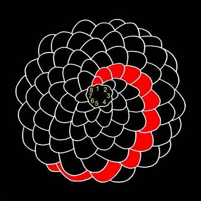 Fibonacci Ratio Golden Pineapple Nature Pinecones Numbers