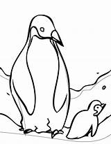 Coloring Sheets Penguin Penguins Pittsburgh Printable Xyzcoloring sketch template